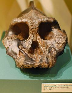 Australopithecus Aethiopecus.