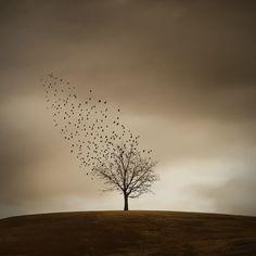 Inspired Australian Nature Photographer Series - Ricardo Da Cunha #natureconnect #steveparish