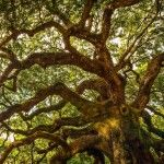 Check Out The Most Majestically Trees In The World!