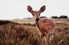 Deer by Bonnie Rhyne Photography Beautiful Creatures, Animals Beautiful, Cute Animals, The Raven, Animal Medicine, Oh Deer, Woodland Creatures, Fauna, Animal Photography