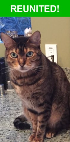 Great news! Happy to report that Manny has been reunited and is now home safe and sound! :)