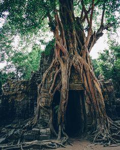"#regram via @igorovsyannykov ""Massive Roots!  #digitalnomad #wanderlust #travel #vsco #instagood #travelgram #passionpassport #traveltheworld #exploretocreate #exploremore #liveauthentic #visualsoflife #traveltips #traveladdict #tourism #backpacker #travelgram #travelasia #southeastasia #internationaltravelmag #cnntravel #bbctravel #neverstopexploring #lonelyplanet #justgoshoot #cambodia #siemreap #summer #asia_vacations #angkorwat"""