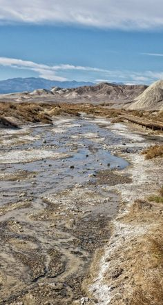Water in Death Valley! This is Salt Creek, where pickleweed and saltgrass grow.