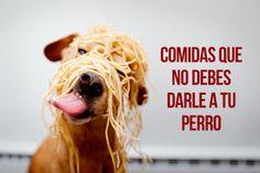 Entérate de los alimentos que no debes darle a tu perro. #Vida #Ecologia #BancoIndustrial