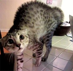Cats Who Have Been Caught By Surprise (Photos)