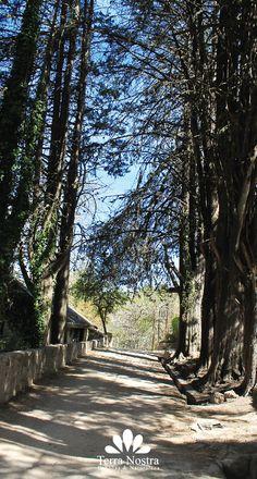 Senderos mágicos! Cabañas Terra Nostra La Cumbrecita en Córdoba #TerraNostra #Travel #Trip #Argentina #Cordoba #LaCumbrecita #Pin #Cabañas #Facebook -->> http://bit.ly/TerraNostra