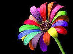 Arco Iris flor! Like & Repin. Noelito Flow. Noel  Panda http://www.instagram.com/noelitoflow