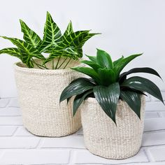 Ethical and sustainable planter baskets for a minimalist look ❤ Large Storage Baskets, Baskets On Wall, Basket Storage, Plant Basket, Basket Planters, Sisal, Fast Growing Plants, Plant Fibres, Unique Plants