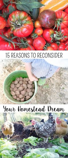 15 Reasons to Reconsider Your Homestead Dream