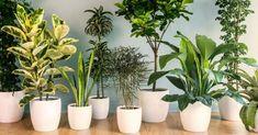 Conoce las plantas que debes tener sin falta en tu hogar.