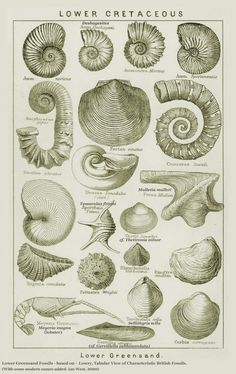 Tattoo idea - victorian fossile drawings Pic from www.southampton.ac.uk