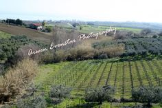 Countryside Vineyard 5x7 print by Arwenevenstarphotos on Etsy