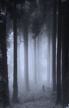 """Foggy forest - maybe if we had evergreens it would look less """"pretty spring"""" and more creepy"""