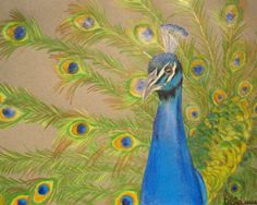 Bold Peacock Painting Art Print by LoveJoyPeaceDesigns on Etsy