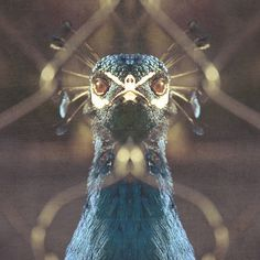 animalada (papá pavo)
