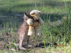 Doodlebug, an orphaned kangaroo, with his teddy bear friend.&nbsp