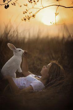 Conejo , Paisaje , Bunny , sunset