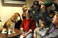 uno westminster dog show Beagle Breeds, Westminster Dog Show, View Video, Fb Page, Show Photos, Photo Galleries, Funny Memes, Lol, Beagles