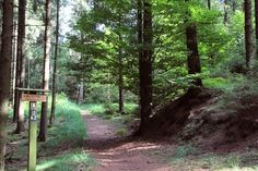 Wanderweg-zu-mystischen-stätten-willebadessen-Karlsschanze-2