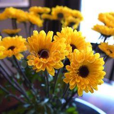Yellow Rubeckia Daisy Black Eyed Susan Flower bouquet - Stock Footage   by LauraMazerolle