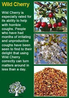Richard Whelan ~ Medical Herbalist ~ Wild Cherry