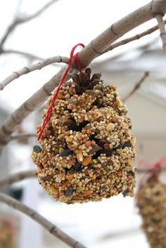 """Pine Cone Bird Feeder"" The boys and made these last winter. Please dont ask why we did it in winter and not in spring, not to mention it was too cold to do it outside we got brd feed everywhere! Put P-nut buttet one it first then cover w/seed and it wont take but an hr at most before your tree starts to see life... and they don't last long at all/ birds Love em'"