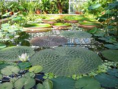 University of Bristol Botanic Garden in Bristol, Bristol  http://www.bristol.ac.uk/botanic-garden/