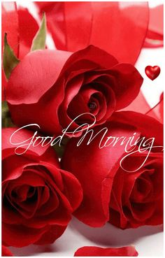 479 Best Good Morning Gif photos by sonusunariya Good Morning Roses, Good Morning Cards, Latest Good Morning, Good Morning Prayer, Good Morning World, Good Morning Happy, Good Morning Picture, Good Morning Friends, Morning Pictures