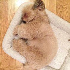 Little bear sleeping  #tbt