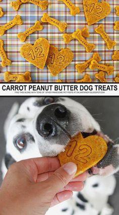 homemade dog food DIY Dog Treat Recipes - Carrot and Peanut Butter Dog Treats Diy Dog Treats, Homemade Dog Treats, Dog Treat Recipes, Healthy Dog Treats, Dog Food Recipes, Vegan Dog Treat Recipe, Vegan Dog Food, Vegetarian Dog Food Recipe, Carrots And Peanut Butter