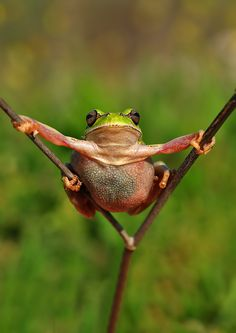 Super frog by  Mustafa Öztürk on 500px.com
