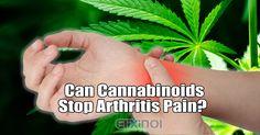 Can cannabinoids stop arthritis pain? - https://elixinol.com/blog/can-cannabinoids-stop-arthritis-pain?utm_source=rss&utm_medium=Friendly+Connect&utm_campaign=RSS #cbd #hemp