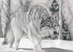 10  Cool Wolf Drawings for Inspiration, http://hative.com/wolf-drawings/,