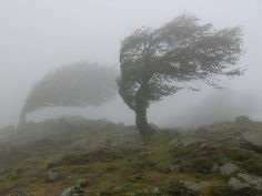 Hair like this (Pui-Leng) Tags: trees mist france rain silhouette fog day wind corsica foggy gale badweather treesubject bocasanpedru Book Aesthetic, Character Aesthetic, Aesthetic Photo, Albedo, Percy Jackson, Wind Pictures, Greek Gods And Goddesses, Eye Of The Storm, Wind Power