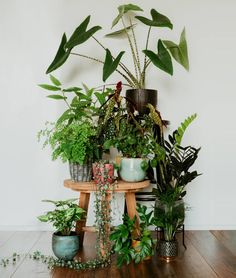 A community focused on the discussion, care, and well-being of houseplants! Room With Plants, House Plants Decor, Plant Decor, Potted Plants, Garden Plants, Indoor Plants, Indoor Flowers, Plants Are Friends, Plant Aesthetic