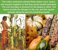 Marine Americans planting guide