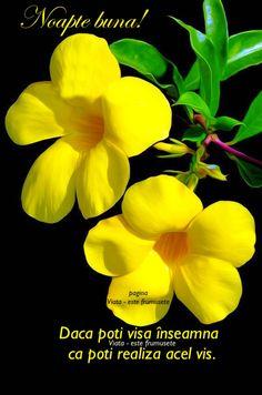 Good Morning Good Night, Minnie, Woman Painting, Flower Art, Art Flowers, Outdoor Gardens, Beautiful Flowers, Bloom, Herbs