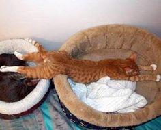 Funny animal planking (17 Photos)