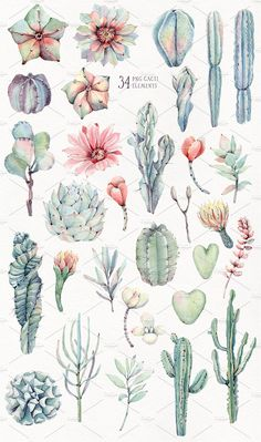 My new watercolor collection harmoniously complements the previous cacti sets. Here you will find new types of succulents, new patternts and compositions. Succulents Drawing, Cactus Drawing, Watercolor Cactus, Plant Drawing, Cactus Art, Cacti And Succulents, Watercolor Paintings, Cactus Tattoo, Grafik Design