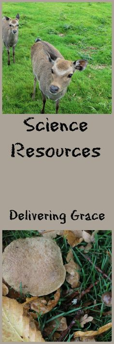 delivering grace: Science Resources Science Resources, Science Projects, Christian Life, Homeschooling, Blogging, Tips, Ideas, Christian Living, Advice