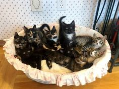 Stray Cat Found Trying to Feed 9 Kittens Even Though She Had No Food For Herself
