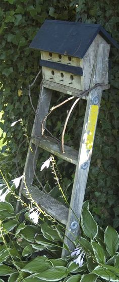 101 Thing to do with old ladders and step ladders   Because then you can buy a new one from us!  http://www.ladders-online.com  // Number: 10 \\ Idea Type: Bird House Holder  Ladder Used: Wooden Loft Ladder   Idea Difficulty: Medium  Location: Garden   #garden   #upcycle #recycling