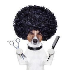 Il barbiere apre le porte ai cani ma non alle donne: e in Spagna divampa la polemica :http://www.qualazampa.news/2016/09/28/il-barbiere-apre-le-porte-ai-cani-ma-non-alle-donne-e-in-spagna-divampa-la-polemica/