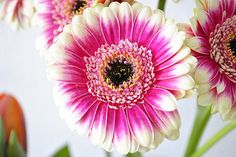 beautiful flowers by stof enzo | Flickr