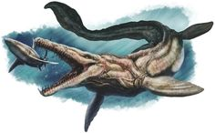 Art illustration - Reptile - Tylosaurus: is an extinct genus of mosasaur, it was one of the predators large carnivorous lizard that lived in ancient oceans of the Cretaceous period. It was the size of a whale medium-sized, double the current orca, and was the most aggressive, feisty and ferocious marine predator of its time. He attacked and ate fish of all kinds, even the fiercest, and any kind of aquatic creature.