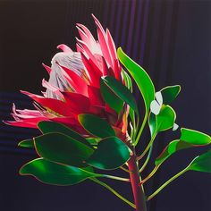 artist: Paul Blomkamp 'Protea the Electric Essence' 130 x 130 cm Acrylic on canvas The gift of the Electric Essence. and the shining shapes it. Protea Art, Tea Bag Art, Rare Flowers, Wild Flowers, Silk Painting, Botanical Art, Flower Power, Poppies, Photos