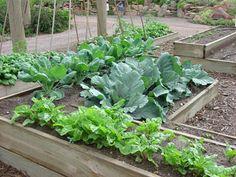 use epsom salt in the vegetable garden