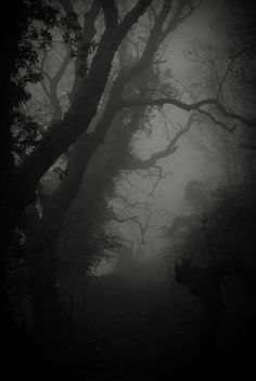 ...as night fell and the fog rolled into the darkness, she waited...