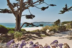 Carmel, CA : Carmel Beach.  Got a pic of myself in front of that tree somewhere in an old box of mementos.  Took my college roommate from Iran there.