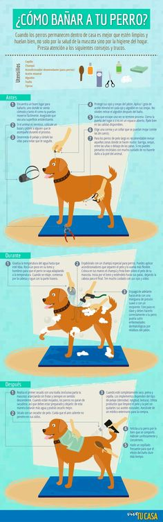 maneras de bañar a tu mascotas